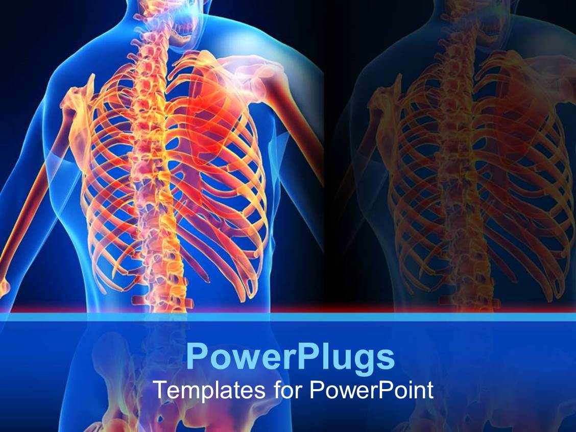Powerpoint template an anatomy of a human skeletal system for Anatomy ppt templates free download