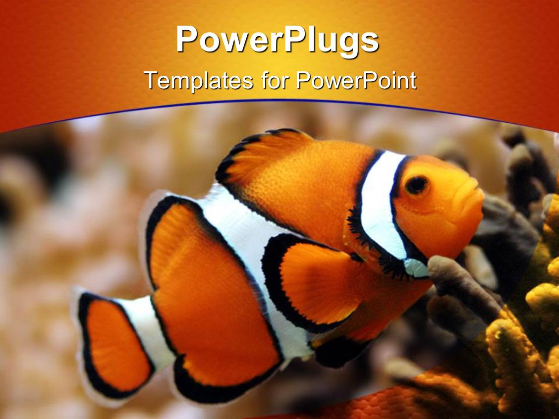 Powerpoint template beautiful clown fish swimming in sea for What kind of fish am i