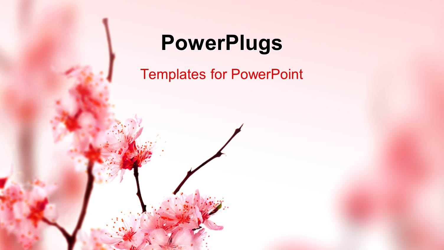 Blossom PowerPoint Templates | CrystalGraphics
