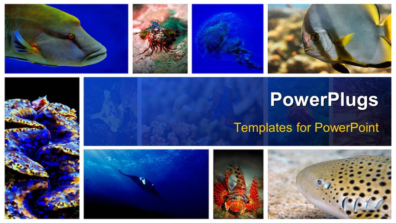 Powerpoint template a number of figures related to sea life in powerpoint template displaying a number of figures related to sea life in the picture toneelgroepblik Images