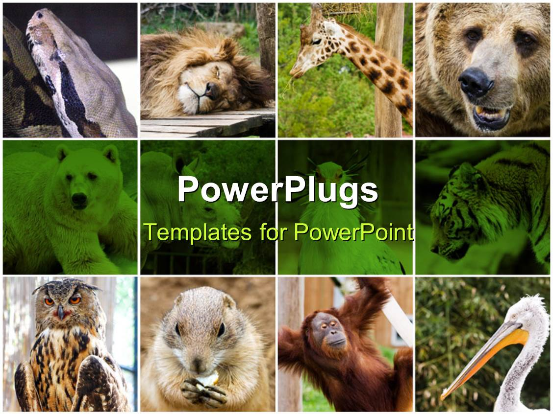 powerpoint template: collage depiction of some wild animals (31330), Modern powerpoint