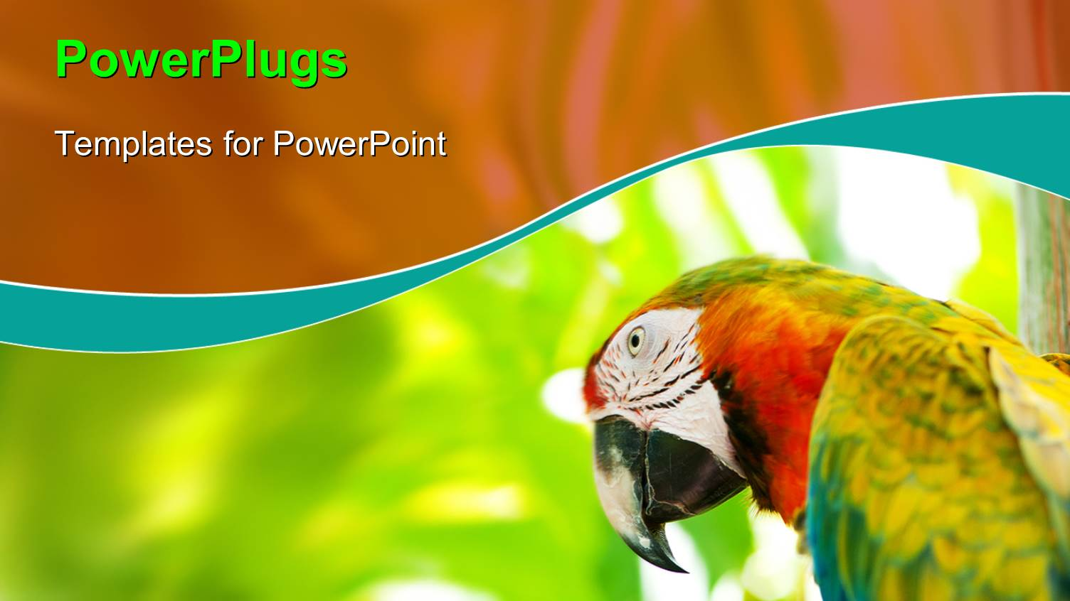 parrot powerpoint templates crystalgraphics