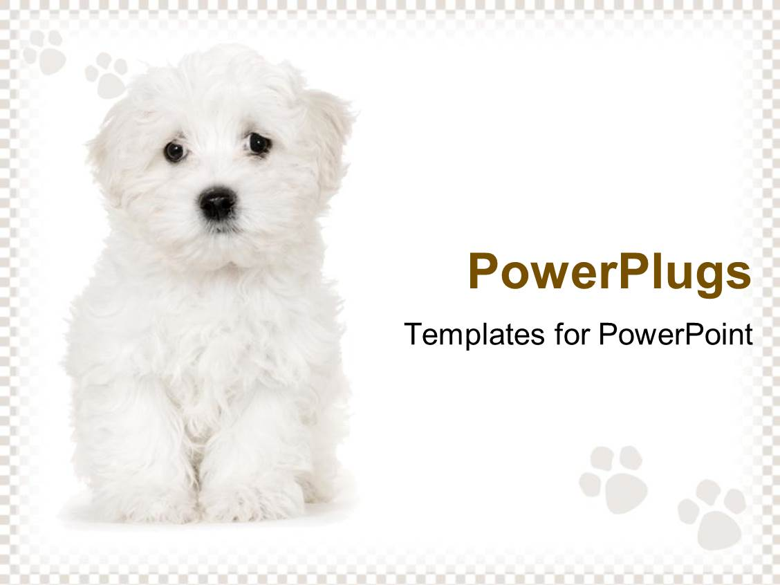 powerpoint template cute sad white puppy on white