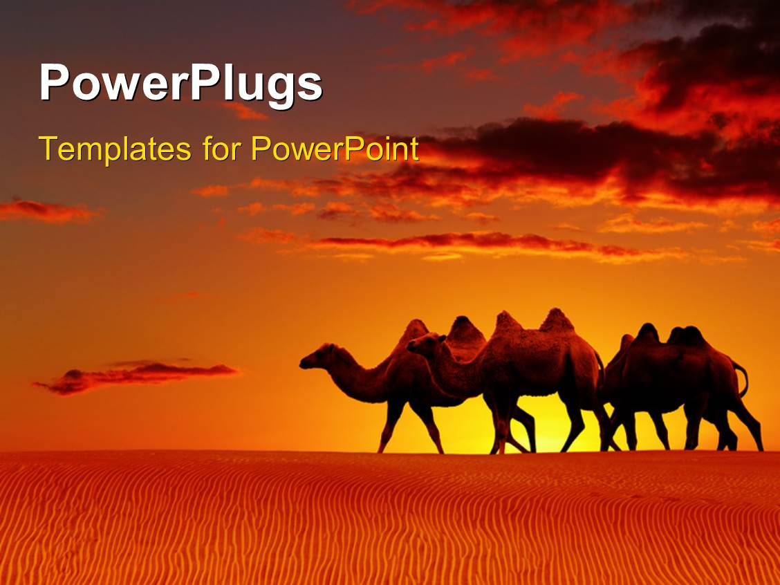 powerpoint template a group of camels in the desert 9259