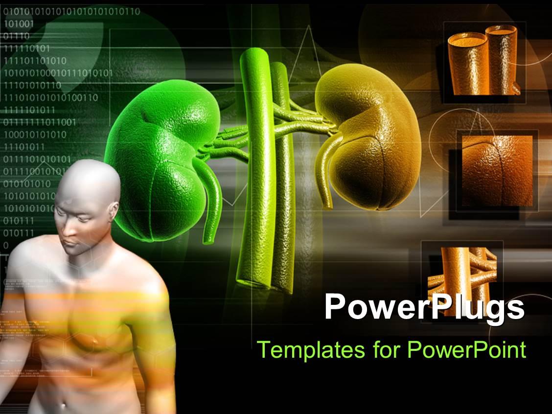 kidney powerpoint templates | crystalgraphics, Powerpoint templates