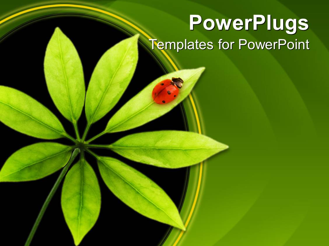 powerpoint template ladybug on green leaf tree leaf with