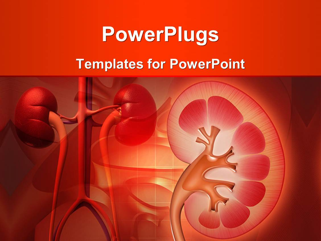 Powerpoint template medical theme with kidney and other for Power plugs powerpoint templates