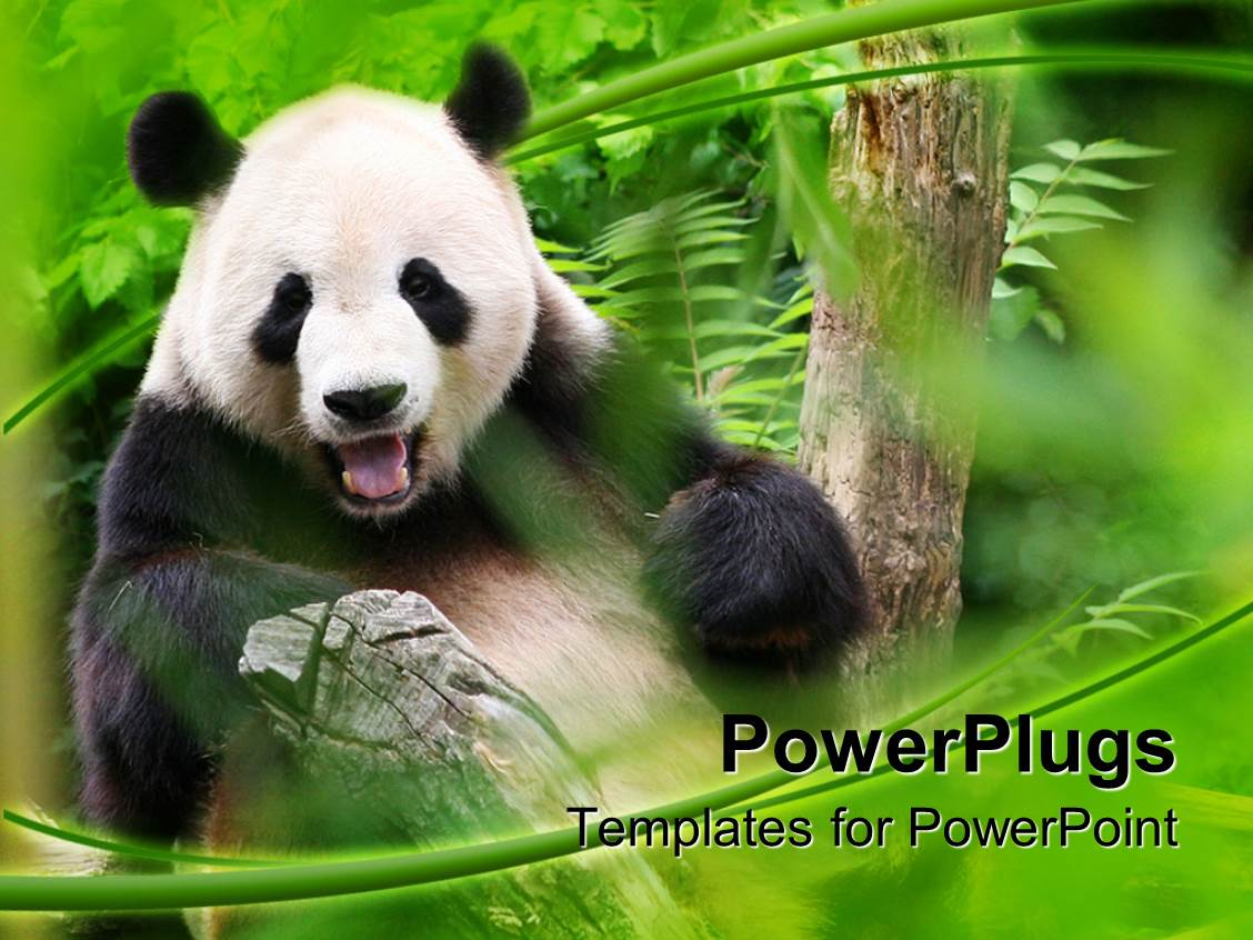 Zoo powerpoint templates crystalgraphics powerplugs powerpoint template with panda is smiling in a zoo surrounded by greenery toneelgroepblik Images
