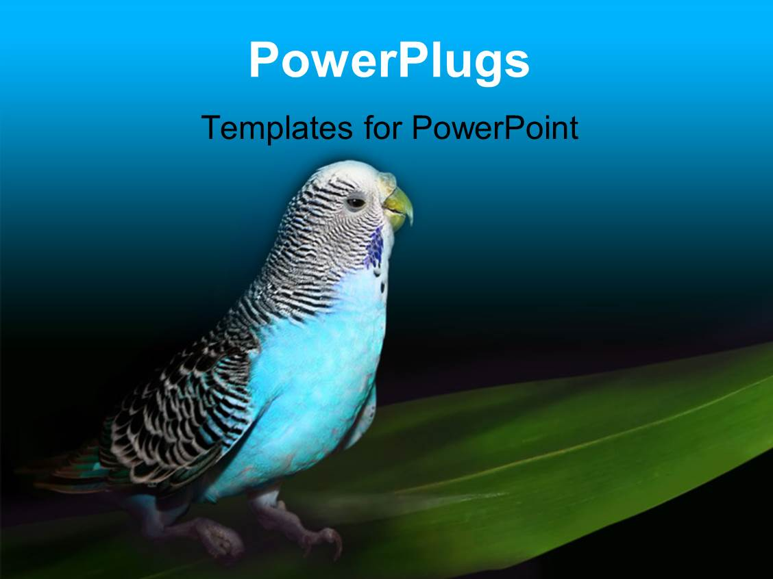 PowerPoint Template Displaying Parrot Sitting on a Green Leaf with Black and Blue Color