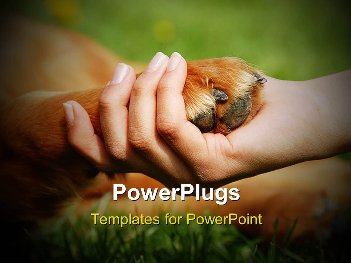 Paw print powerpoint template quantumgaming powerpoint template a person holding the dogs paw in his hand 1855 toneelgroepblik Choice Image