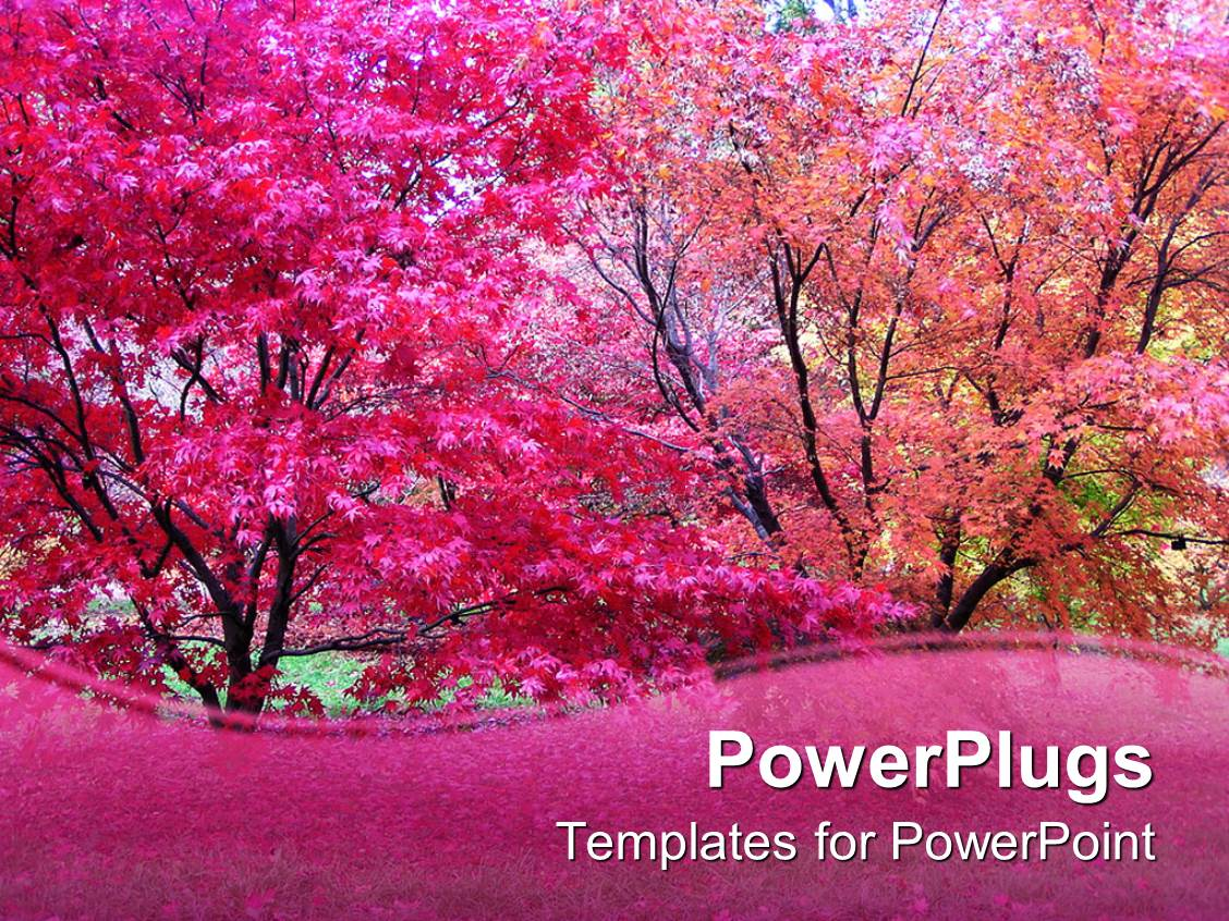 powerpoint template: pink japanese maple trees in fall autumn, Powerpoint templates