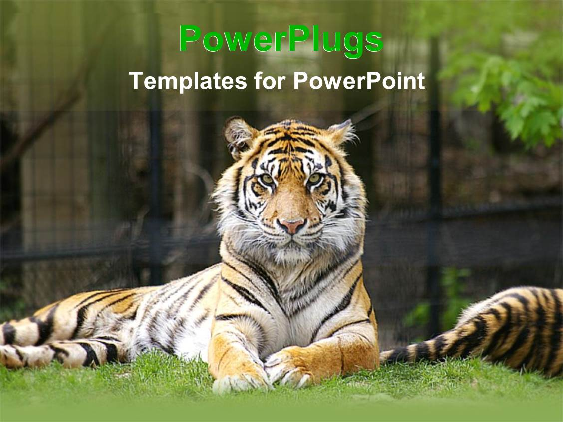 100 powerpoint templates zoo gold christmas baubles zoo powerpoint templates crystalgraphics tiger lying grass looking zoo 1757 zoo toneelgroepblik Gallery