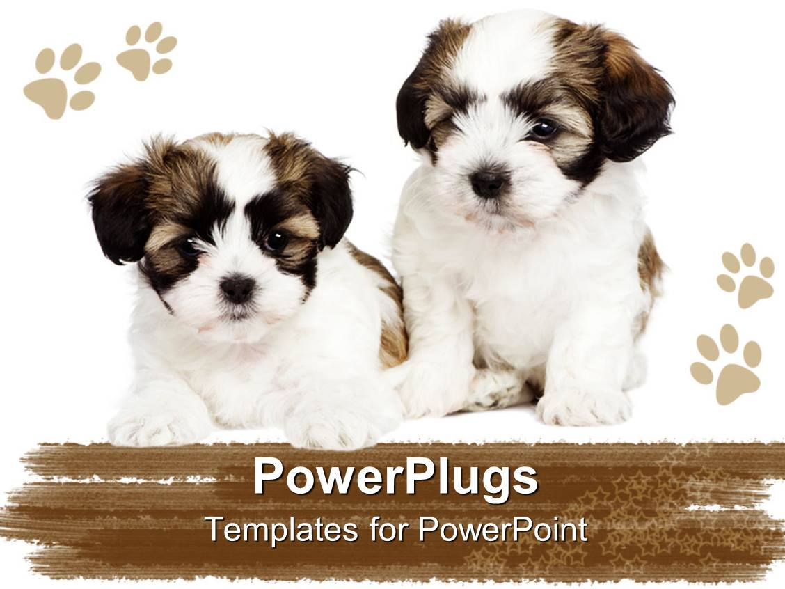 powerpoint template two cute puppies showing friendship