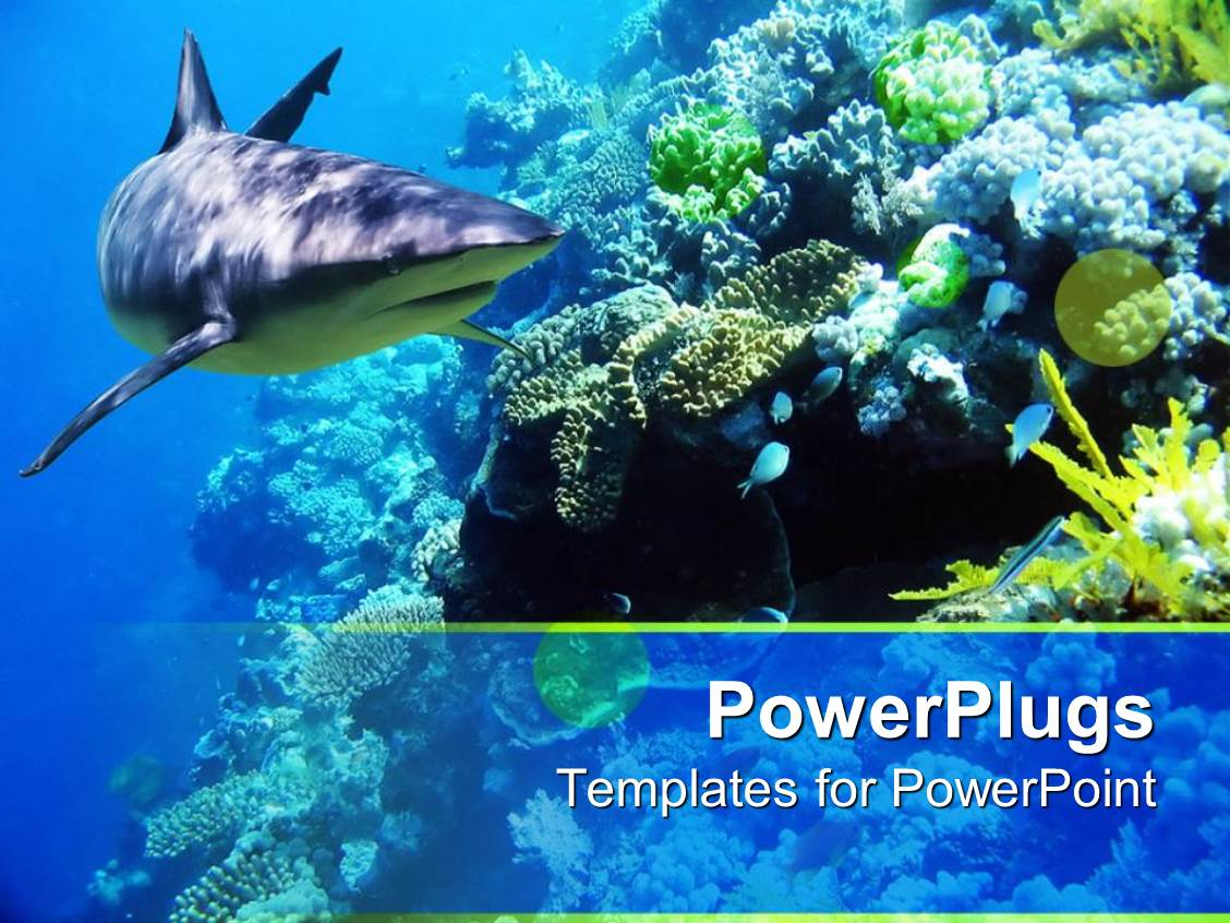 Powerpoint template underwater coral reef ocean with shark and powerpoint template displaying underwater coral reef ocean with shark and small fish toneelgroepblik Images