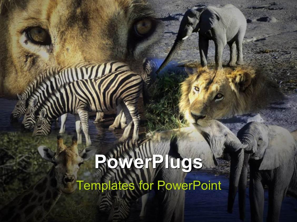Powerpoint template various animals in a jungle with grayish powerpoint template displaying various animals in a jungle with grayish background toneelgroepblik Gallery