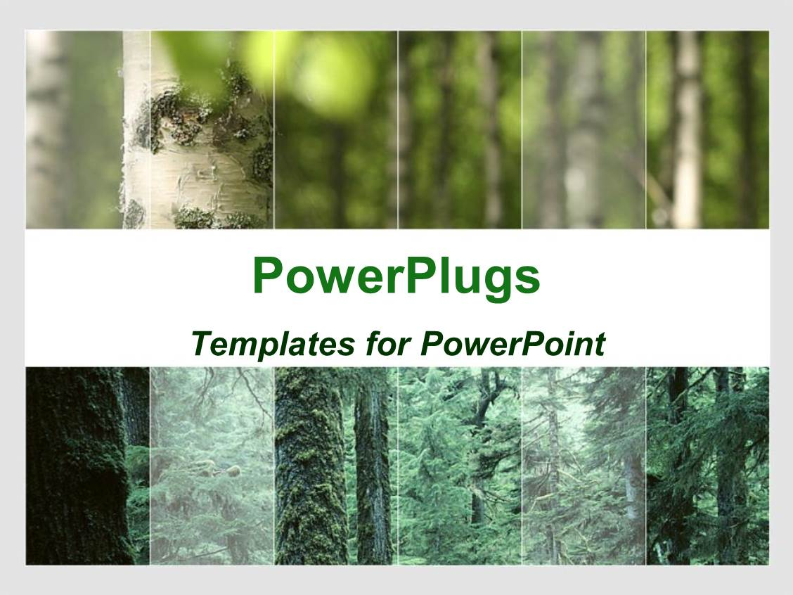 Forest powerpoint template fieldstation forest powerpoint template toneelgroepblik Image collections